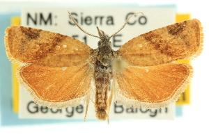 (Platynota zapatana - CCDB-19580-E03)  @15 [ ] CreativeCommons - Attribution Non-Commercial Share-Alike (2012) CBG Photography Group Centre for Biodiversity Genomics