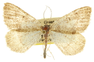 (Speranza confederata - CCDB-20283-B06)  @15 [ ] CreativeCommons - Attribution Non-Commercial Share-Alike (2013) CBG Photography Group Centre for Biodiversity Genomics