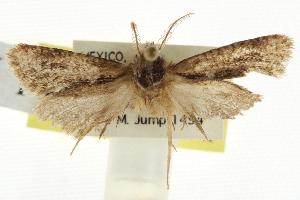 (Acrolophus pinnatus - BIOUG09241-H09)  @11 [ ] CreativeCommons - Attribution Non-Commercial Share-Alike (2013) CBG Photography Group Centre for Biodiversity Genomics
