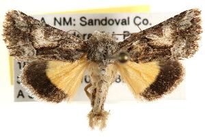 (Pseudanarta crocea - CCDB-22944-A04)  @15 [ ] CreativeCommons - Attribution Non-Commercial Share-Alike (2014) CBG Photography Group Centre for Biodiversity Genomics