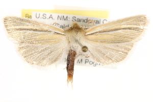 (Neleucania patricia - CCDB-22948-A03)  @15 [ ] CreativeCommons - Attribution Non-Commercial Share-Alike (2014) CBG Photography Group Centre for Biodiversity Genomics