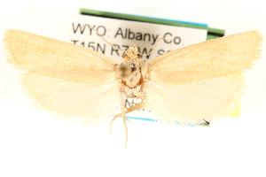 (Pelochrista lafontainei - CCDB-22958-E12)  @13 [ ] CreativeCommons - Attribution Non-Commercial Share-Alike (2014) CBG Photography Group Centre for Biodiversity Genomics