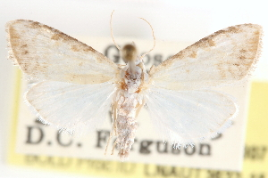 ( - CCDB-23287-B07)  @13 [ ] CreativeCommons - Attribution Non-Commercial Share-Alike (2015) CBG Photography Group Centre for Biodiversity Genomics