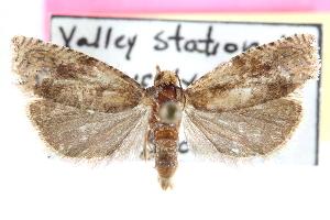 (Pelochrista wandana - CCDB-24282-H05)  @11 [ ] CreativeCommons - Attribution Non-Commercial Share-Alike (2015) CBG Photography Group Centre for Biodiversity Genomics