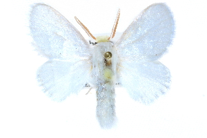 (Norape ovina - CCDB-28563-C07)  @15 [ ] CreativeCommons - Attribution Non-Commercial Share-Alike (2015) CBG Photography Group Centre for Biodiversity Genomics