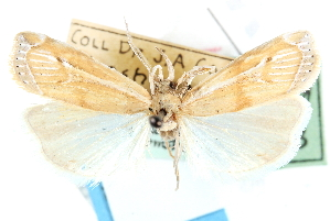 ( - CCDB-28957-G01)  @11 [ ] CreativeCommons - Attribution Non-Commercial Share-Alike (2016) CBG Photography Group Centre for Biodiversity Genomics