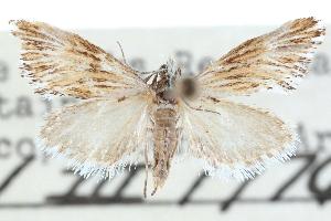(Edia - CCDB-28964-F03)  @14 [ ] CreativeCommons - Attribution Non-Commercial Share-Alike (2016) CBG Photography Group Centre for Biodiversity Genomics