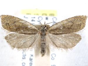 (Hystrichophora leonana - CCDB-29454-B03)  @11 [ ] CreativeCommons - Attribution Non-Commercial Share-Alike (2017) CBG Photography Group Centre for Biodiversity Genomics