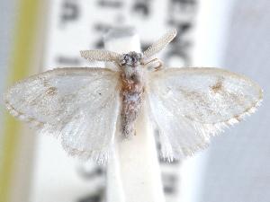 (Microrape - CCDB-29455-A12)  @11 [ ] CreativeCommons - Attribution Non-Commercial Share-Alike (2017) CBG Photography Group Centre for Biodiversity Genomics