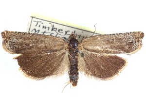 (Hystrichophora ostentatrix - CCDB-29483-B11)  @11 [ ] CreativeCommons - Attribution Non-Commercial Share-Alike (2017) CBG Photography Group Centre for Biodiversity Genomics