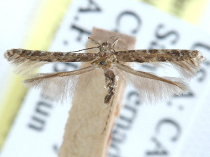 (Cryptolectica - CCDB-29488-F01)  @11 [ ] CreativeCommons - Attribution Non-Commercial Share-Alike (2017) CBG Photography Group Centre for Biodiversity Genomics
