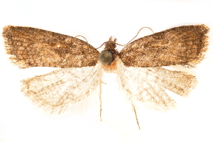 (Ernocornutia - CCDB-29475-B10)  @11 [ ] CreativeCommons - Attribution Non-Commercial Share-Alike (2018) CBG Photography Group Centre for Biodiversity Genomics