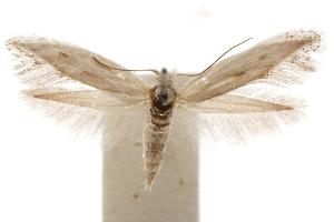 (Hemiprosopa - CCDB-31442-C07)  @11 [ ] CreativeCommons - Attribution Non-Commercial Share-Alike (2018) CBG Photography Group Centre for Biodiversity Genomics