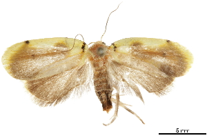 (Hypercallia citroclista - CCDB-30827-A09)  @11 [ ] CreativeCommons - Attribution Non-Commercial Share-Alike (2018) CBG Photography Group Centre for Biodiversity Genomics