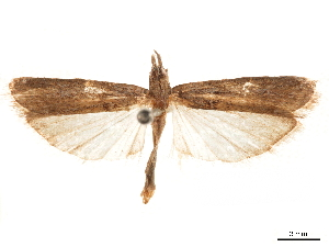 (Honorinus fulginosus - CCDB-32976-H02)  @11 [ ] CreativeCommons - Attribution Non-Commercial Share-Alike (2019) CBG Photography Group Centre for Biodiversity Genomics