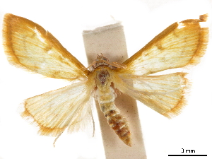 ( - CCDB-33189-A05)  @11 [ ] CreativeCommons - Attribution Non-Commercial Share-Alike (2019) CBG Photography Group Centre for Biodiversity Genomics
