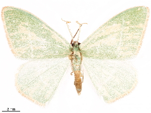 ( - CCDB-33582-H09)  @11 [ ] CreativeCommons - Attribution Non-Commercial Share-Alike (2019) CBG Photography Group Centre for Biodiversity Genomics