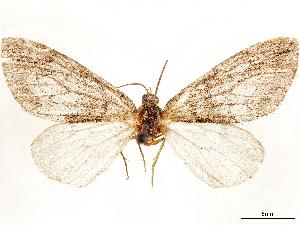 (Hydriomena arizonata - CCDB-33585-A06)  @11 [ ] CreativeCommons - Attribution Non-Commercial Share-Alike (2019) CBG Photography Group Centre for Biodiversity Genomics