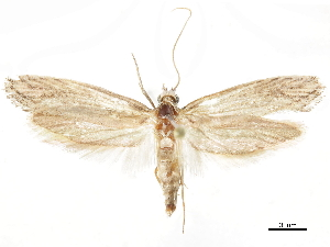 (Lithopsaestis - CCDB-34785-C09)  @11 [ ] CreativeCommons - Attribution Non-Commercial Share-Alike (2019) CBG Photography Group Centre for Biodiversity Genomics