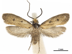 (Sphecioses acignathus - CCDB-34785-D07)  @11 [ ] CreativeCommons - Attribution Non-Commercial Share-Alike (2019) CBG Photography Group Centre for Biodiversity Genomics