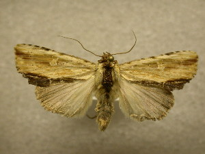 (Antachara sp - 09-MISC-087)  @14 [ ] Unspecified (default): All Rights Reserved  Unspecified Unspecified
