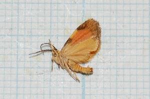 ( - CLV342)  @13 [ ] Copyright (2010) Carlos Lopez-Vaamonde Institut National de la Recherche Agronomique, Orleans, Forestry Zoology
