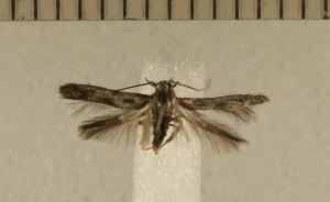 ( - CLV4940)  @12 [ ] Copyright (2012) Olivier Bouteleux Institut National de la Recherche Agronomique, Forestry Zoology