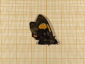 ( - CLV5542)  @12 [ ] Copyright (2012) Olivier Bouteleux Institut National de la Recherche Agronomique, Forestry Zoology