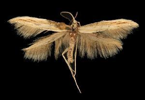 (Coleophora JFL040 - 06-BLLOC-3460)  @14 [ ] CreativeCommons - Attribution Non-Commercial Share-Alike (2010) CBG Photography Group Centre for Biodiversity Genomics