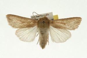 (Leucania farcta - 06-BLLOC-4178)  @15 [ ] CreativeCommons - Attribution Non-Commercial Share-Alike (2010) CBG Photography Group Centre for Biodiversity Genomics