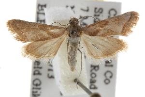 (Noctueliopsis aridalis - BIOUG06952-B12)  @14 [ ] CreativeCommons - Attribution Non-Commercial Share-Alike (2013) CBG Photography Group Centre for Biodiversity Genomics