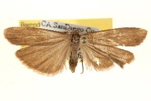( - BIOUG12229-E03)  @12 [ ] CreativeCommons - Attribution Non-Commercial Share-Alike (2014) CBG Photography Group Centre for Biodiversity Genomics