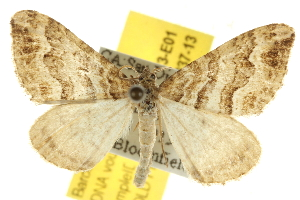 ( - BIOUG07173-E01)  @14 [ ] CreativeCommons - Attribution Non-Commercial Share-Alike (2012) CBG Photography Group Centre for Biodiversity Genomics