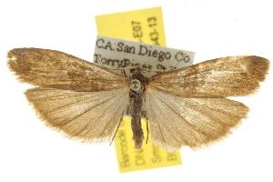 ( - BIOUG07173-E07)  @12 [ ] CreativeCommons - Attribution Non-Commercial Share-Alike (2012) CBG Photography Group Centre for Biodiversity Genomics