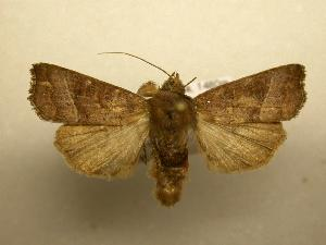 (Hypotrix sp.CR4 - 08-CRBS-085)  @14 [ ] Unspecified (default): All Rights Reserved  Unspecified Unspecified