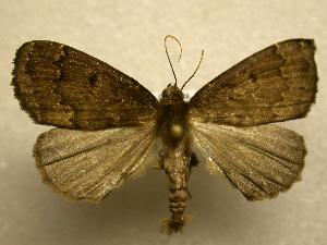 (Dasciopteryx sp. CR1 - 07-CRBS-1183)  @14 [ ] Unspecified (default): All Rights Reserved  Unspecified Unspecified