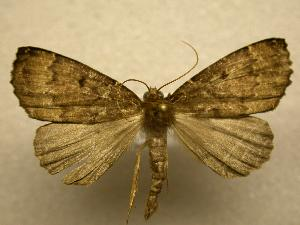 (Dasciopteryx sp. CR2 - 07-CRBS-1184)  @14 [ ] Unspecified (default): All Rights Reserved  Unspecified Unspecified