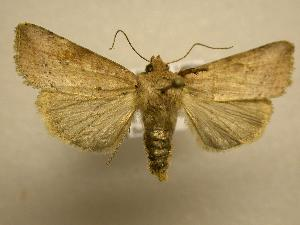 (Hypotrix sp. CR-8 - 08-CRBS-797)  @14 [ ] Unspecified (default): All Rights Reserved  Unspecified Unspecified