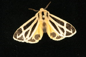 ( - 05-CTATBI-0023)  @13 [ ] CreativeCommons - Attribution Non-Commercial Share-Alike (2010) CBG Photography Group Centre for Biodiversity Genomics