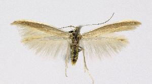 ( - KBE 2018127)  @11 [ ] Creative Commons – Attribution Non-Commercial Share-Alike (2018) Kai Berggren NTNU University Museum, Department of Natural History
