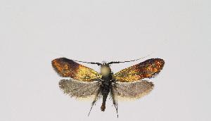 ( - KBE 2018191)  @11 [ ] Creative Commons – Attribution Non-Commercial Share-Alike (2018) Kai Berggren NTNU University Museum, Department of Natural History