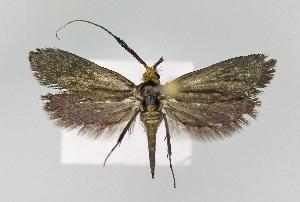( - KBE 2018193)  @11 [ ] Creative Commons – Attribution Non-Commercial Share-Alike (2018) Kai Berggren NTNU University Museum, Department of Natural History