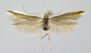 ( - KBE 2018248)  @11 [ ] Creative Commons – Attribution Non-Commercial Share-Alike (2018) Kai Berggren NTNU University Museum, Department of Natural History