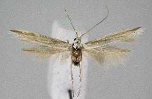 ( - KBE 2018249)  @11 [ ] Creative Commons – Attribution Non-Commercial Share-Alike (2018) Kai Berggren NTNU University Museum, Department of Natural History