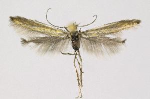 ( - KBE 2018256)  @11 [ ] Creative Commons – Attribution Non-Commercial Share-Alike (2018) Kai Berggren NTNU University Museum, Department of Natural History