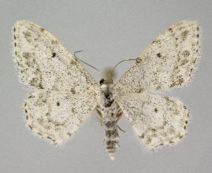 ( - KBE 2018318)  @11 [ ] Creative Commons – Attribution Non-Commercial Share-Alike (2018) Kai Berggren NTNU University Museum, Department of Natural History