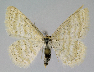 ( - KBE 2018320)  @11 [ ] Creative Commons – Attribution Non-Commercial Share-Alike (2018) Kai Berggren NTNU University Museum, Department of Natural History