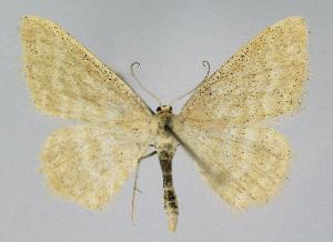 ( - KBE 2018322)  @11 [ ] Creative Commons – Attribution Non-Commercial Share-Alike (2018) Kai Berggren NTNU University Museum, Department of Natural History