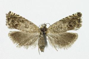( - KBE 2018355)  @11 [ ] Creative Commons – Attribution Non-Commercial Share-Alike (2018) Kai Berggren NTNU University Museum, Department of Natural History