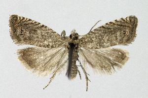( - KBE 2018356)  @11 [ ] Creative Commons – Attribution Non-Commercial Share-Alike (2018) Kai Berggren NTNU University Museum, Department of Natural History